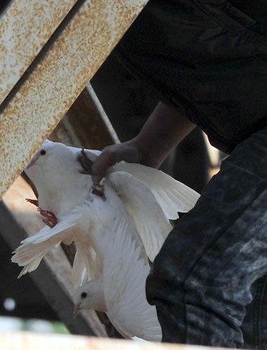 鸟CAU-6-486071-1368798962_500x0.jpg
