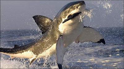 shark5-112020-1368811054_500x0.jpg