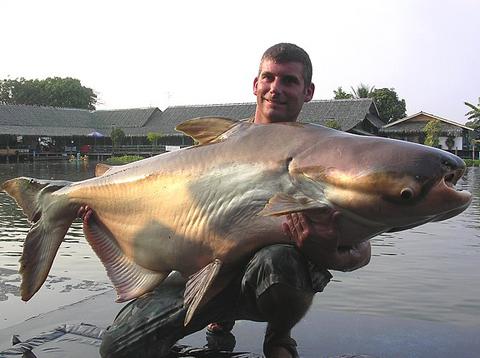 Cá da trơn