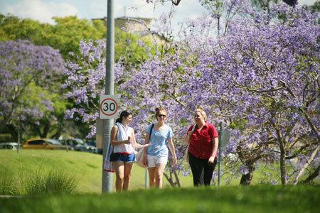 3. Mùa phượng tím cũng là lúc mùa đông chuyển sang hè nên thời tiết Brisbane rất dễ chịu và mát mẻ. Cảm giác bình yên khi dạo bước dưới hàng phượng rực rỡ trong thời tiết này là một điều khó quên đối với những bạn đã từng sống và học tập tại đây.