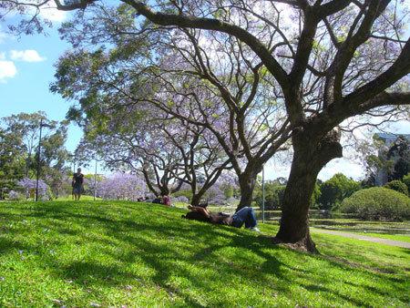 9. Mùa phượng tím cũng là mùa thi. Một năm ở học ở Australia thường có hai học kì, bắt đầu từ tháng 3 đến hết tháng 6 và cuối tháng 7 đến tháng 11; thời gian nghỉ hè từ cuối tháng 11 đến tháng 3 năm sau. Thông thường tháng 11 là thời gian bận rộn nhất của sinh viên. Nằm trên thảm cỏ và hoa dưới nắng ấm, ngắm nhìn khung cảnh thơ mộng bên hồ nước có lẽ là phần thưởng lớn nhất dành cho các bạn sinh viên UQ sau những giờ học căng thẳng.