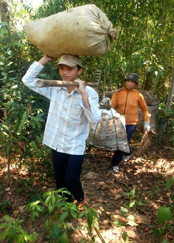 Ngoài giờ học, Nguyễn Hữu Ấn, Tân sinh viên trường Đại học Y Dược TP HCM phụ giúp mẹ quét lá rừng phòng hộ ven biển bán các lò gạch thủ công kiếm tiền mua sách, vở. Ảnh: Trí Tín