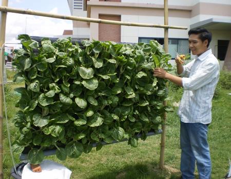 Tác giả và mô hình trồng rau vườn treo