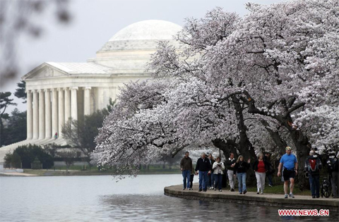 Tourists walk beneath cherry blossom trees along the Tidal Basin in Washington D.C., the United States, on March 18, 2012. The annual Cherry Blossom Festival will begin here on March 20, commemorating the 100th anniversary of Japan's gift of 3,000 Japanese cherry blossom trees to Washington in 1912. (Xinhua/Lin Yu)