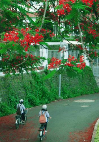 Những cô bé học trò đạp xe trước cổng trường
