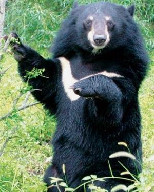 Bảo vệ động vật hoang dã từ những việc nhỏ nhất như tuyên truyền ý thức cho người dân. Ảnh minh họa