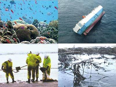Bảo vệ môi trường cần những hành động thiết thực. Ảnh minh họa