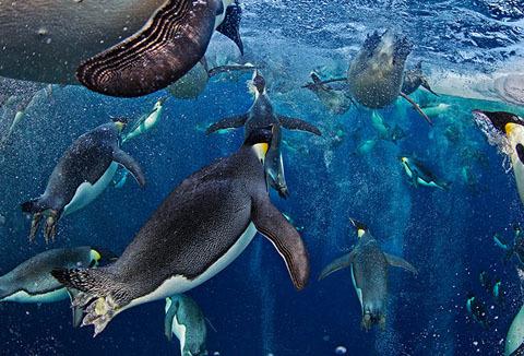 Veolia Environnement được thế giới ghi nhận như một giải Oscar trong nghệ thuật nhiếp ảnh về động vật hoang dã. Một cuộc triển lãm những bức ảnh đoạt giải sẽ được mở tại Bảo tàng Lịch sử Tự nhiên ở London ngày 19/10 tới.