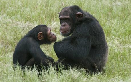 Khủng hoảng tâm lý cũng xuất hiện ở tinh tinh tinh trong giai đoạn giữa cuộc đời. Ảnh: AP.