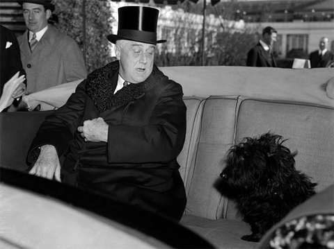 "1941: It's hard to blame Fala the Scottie pup for jumping into President Franklin Roosevelt's car as he headed to Capitol Hill for his third inauguration. What dog doesn't like to go for a ride? The original caption says Fala is ""looking disconcerted as the President informs him that there is no place for little dogs in such momentous affairs."""