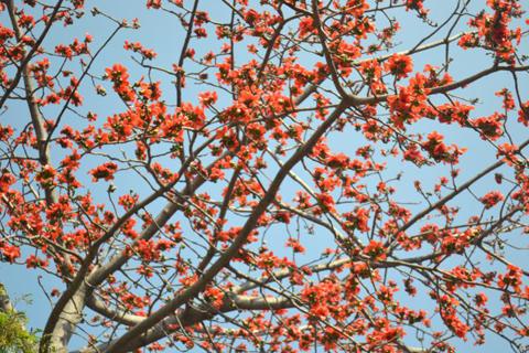 Mùa hoa tình yêu ở Ấn Độ