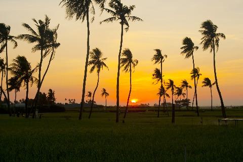 Bình minh lên trên cánh đồng hành phía tây của đảo lớn Lý Sơn, một ngày mới đã bắt đầu.