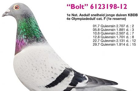 Thông tin về chim bồ câu