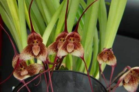 Hình ảnh của loài hoa này được lưu truyền trên mạng một năm trước đây, người ta cảm thấy khó tin rằng đây là loài hoa có thật.