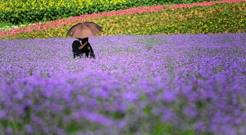 Các cặp tình nhân cũng tranh thủ đến với mùa hoa để chụp ảnh và nghỉ ngơi.