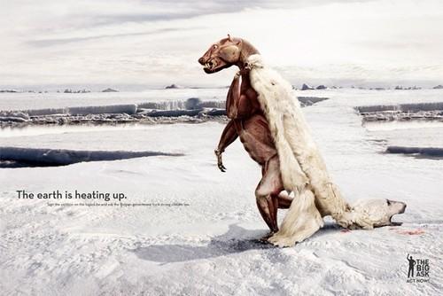 Một chú gấu Bắc cực phải cởi bộ lông của mình vì quá nóng. Bức poster này được sáng tạo bởi công ty quảng cáo TBWA (Bỉ) trong chiến dịch The Big Ask trên quy mô 17 quốc gia châu Âu.   Chiến dịch này tổ chức nhằm kêu gọi người dân Bỉ cùng ký vào một bản khuyến nghị chính phủ nước này cải thiện hệ thống pháp luật nhằm bảo vệ môi trường, ngăn chặn biến đổi khí hậu.