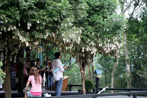 Những đôi bạn trẻ đang yêu lại thích thú với một buổi đi dạo trong rừng và ghi những lời yêu thương lên cây thông này, nơi đang treo hàng nghìn lời ước nguyện.