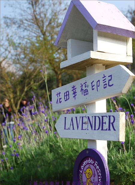 Ngay khi rừng hoa oải hương ra đời, nó đã trở thành địa chỉ được yêu thích của đông đảo bạn trẻ trên khắp Đài Loan.