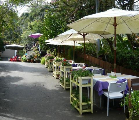 Được quy hoạch tổng thể trên một diện tích rộng, khu rừng hoa oải hương bao gồm các vườn hoa, các khu vui chơi, các quán cafe trong nhà và ngoài vườn, khu mua sắm đồ lưu niệm. Đặc biệt là tất cả các loài hoa trong khu rừng này đều có màu tím và các loại dụng cụ bài trí cũng mang màu tím, giống màu hoa oải hương.