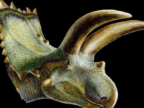 hình ảnh của loài khủng long mới này qua sự tái hiện của các nhà khoa học. (Ảnh : Lukas Panzarin/Utah Museum of Natural History)