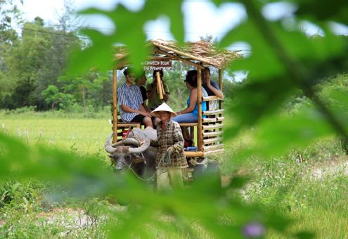 Những khách Tây cưỡi trâu, cày ruộng ở Việt Nam