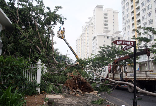 Ở khu vực Mỹ Phú, một cây đã ngã đè vào căn hộ.