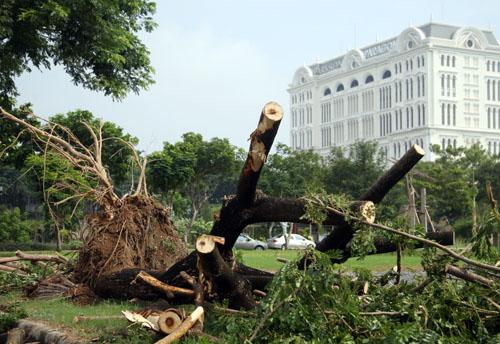 Một cây bật gốc gần tòa nhà Paragon.