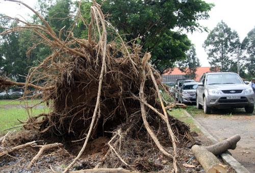 Cơn mưa to kèm theo gió mạnh chiều tối 6/9 khiến TP HCM xảy ra nhiều sự cố. Trong đó, ảnh hưởng nặng nề nhất là hàng loạt cây xanh bật gốc ở khu Phú Mỹ Hưng.