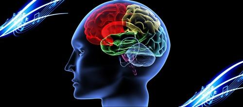 """Ông Schlegel cho rằng """"càng hiểu cách vận hành của não bộ, ta sẽ càng biết cách chế tạo máy móc""""."""