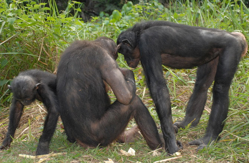 10-bonobo-10-animals-with-huma-6234-2746