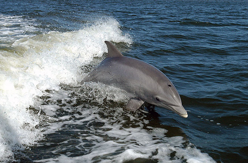 2-dolphin-10-animals-with-huma-6591-5976