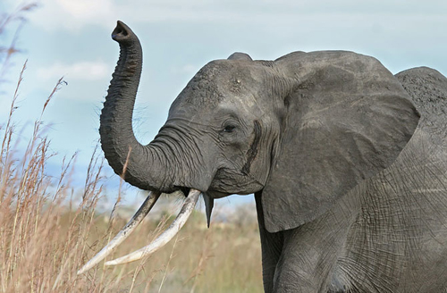 4-elephant-10-animals-with-hum-9799-2367