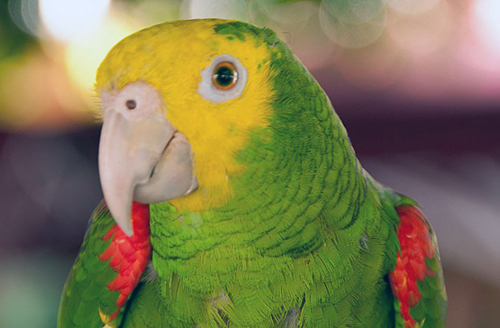 6-parrot-10-animals-with-human-8485-1192