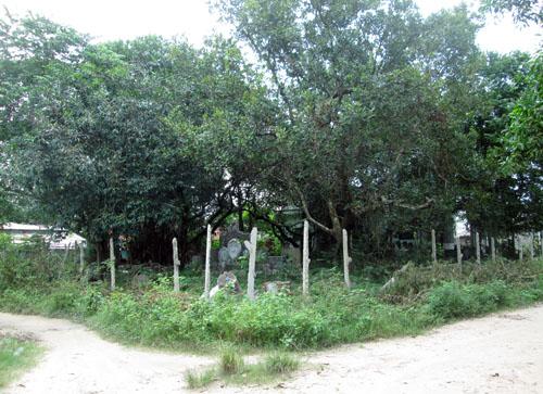 Cách đây 11 năm, ông Phạm Chứng, chủ nhân của khu vườn này mua lại mảnh đất rộng khoảng 1000 m2, ngay giữa khu dân cư ấp Long Hải (xã Trường Tây, huyện Hòa Thành, tỉnh Tây Ninh) để xây một ngôi nhà thờ.