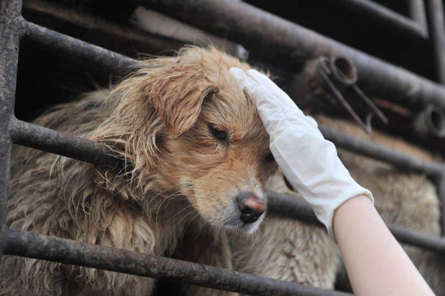 dog-meat-afp-2459-1380541193