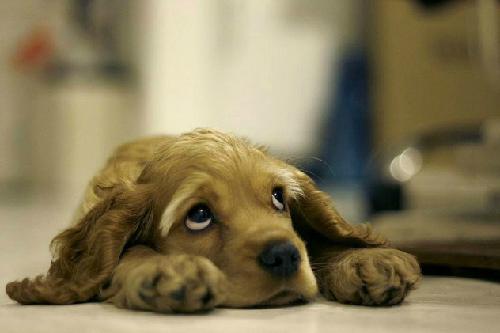 sad-dog-e1380503396915_1380948335_138094