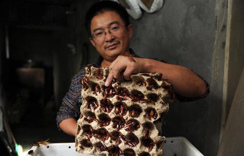 Wang Fuming nuôi gián trong một nhà kho ở ngoại ô gần thành phố Tế Nam. Ảnh: LA Times.