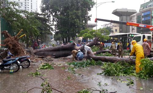 Sáng nay, cơn mưa kéo dài, gió nhẹ, khiến cây đổ, cành gãy trên các tuyến đường, con phố của thủ đô. Đặc biệt trên đường Trần Phú, Hà Đông. Một cây xà cử cổ thụ đổ chắn ngang đường, cản trở giao thông theo hướng về Ngã Tư Sở.