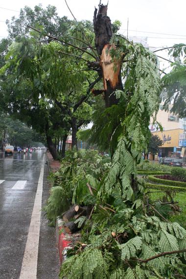 Ông Nguyễn Xuân Hưng, Phó Giám đốc Công ty Cây xanh Hà Nội, cho biết có 10 sự cố về xây xanh nhưng đều là những sự cố nhỏ với những cây có đường kính thân từ 30cm trở xuống; hiện đều đã được khắc phục xong.