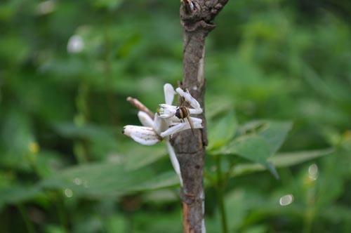 orchid-mantis-3-6493-1385953583.jpg
