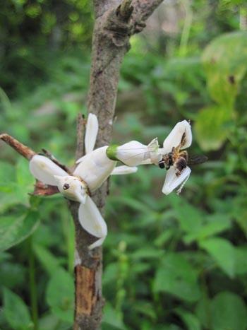 orchid-mantis-6-3533-1385953583.jpg