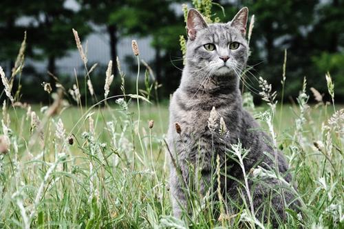 field-cat-131216-3244-1387360302.jpg
