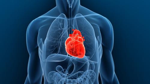 Cấy ghép thành công tim nhân tạo ở người