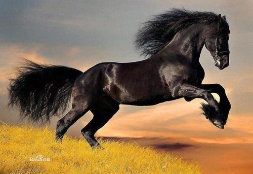 Ngựa Tuyệt Ảnh hy sinh thân mình cứu chủ