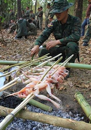 Hổ mang Vàng bắt đầu năm 1982 và trở thành cuộc tập trận quân sự đa quốc gia lớn nhất khu vực châu Á - Thái Bình Dương.
