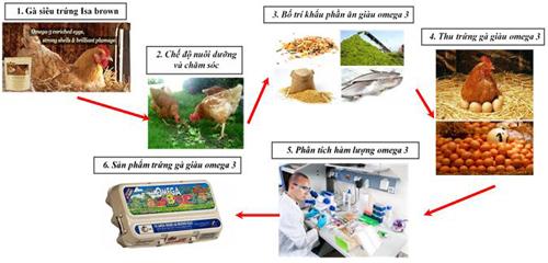 Tóm tắt sơ đồ công nghệ sản xuất trứng gà giàu Omega-3