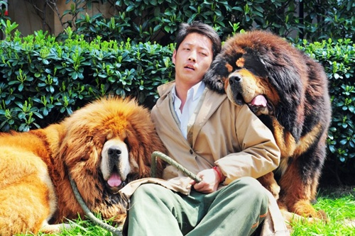 This picture taken on March 18, 2014 shows an unidentified man posing for a photo with two Tibetan mastiffs  after they were sold at a