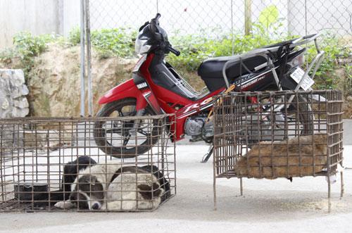 Gã trộm chó bị bắt tại nhà