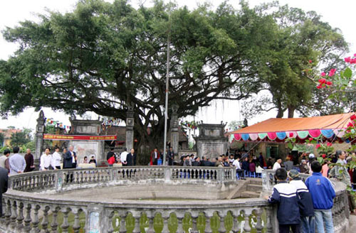 Cây sanh hơn 200 năm tuổi tán rộng gần 300m², từng được trả giá cả chục tỷ đồng ở Thái Bình vừa được công nhận là di sản Việt Nam.