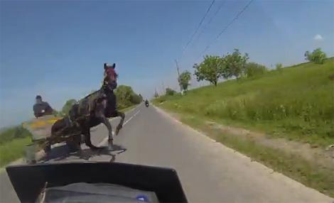 cô gái đi môtô đứng tim vì ngựa - 1